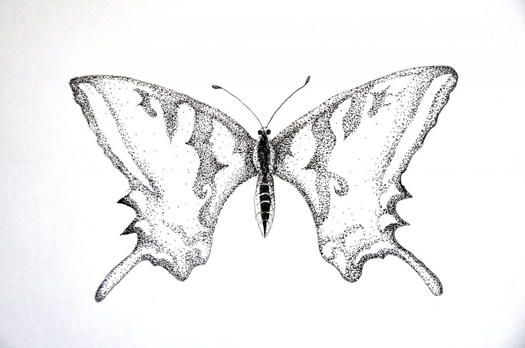 dessin_006-papillon