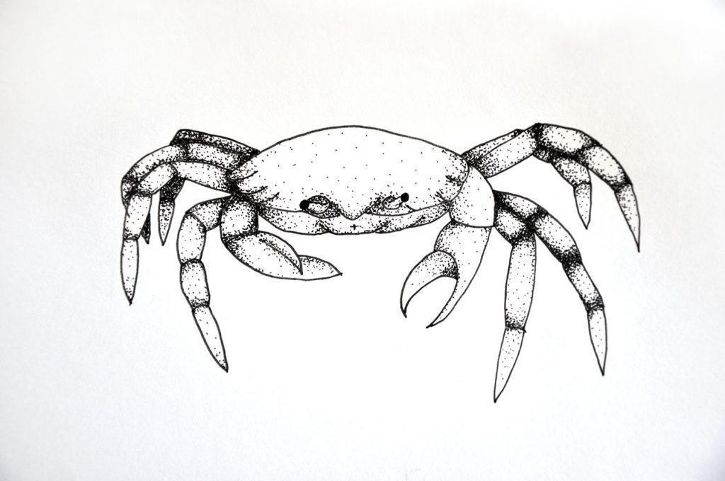 dessin_003-crabe