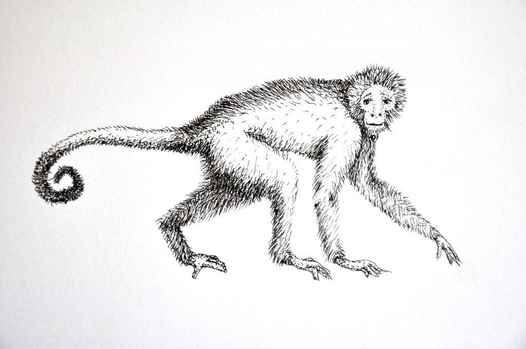 dessin_012-singe