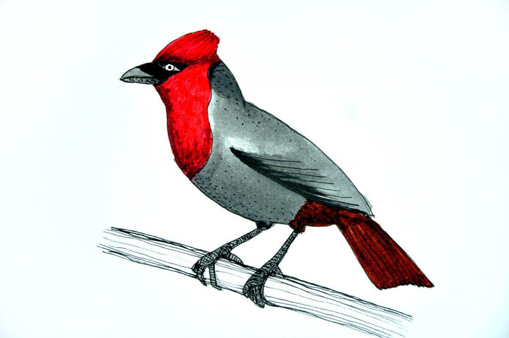 dessin_013-oiseau
